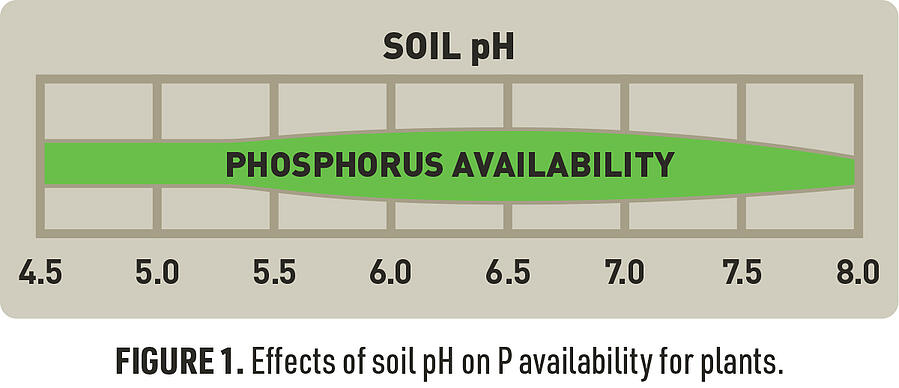 Figure 1: effects of soil pH on phosphorus availability for plants