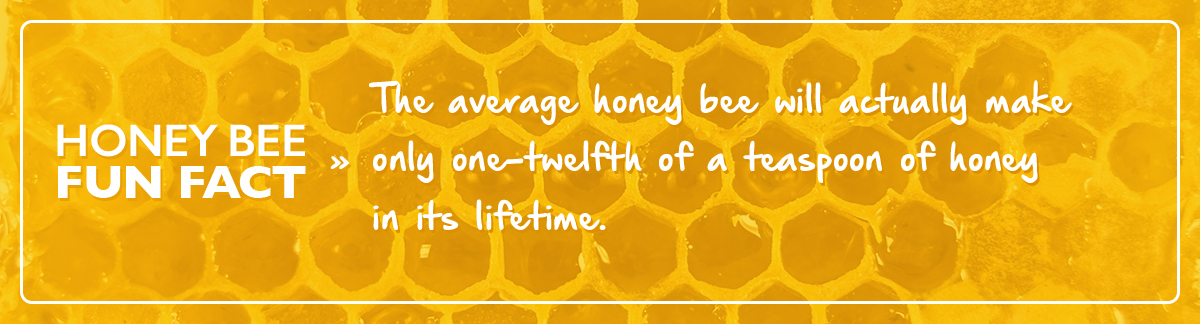 honey bee fun facts