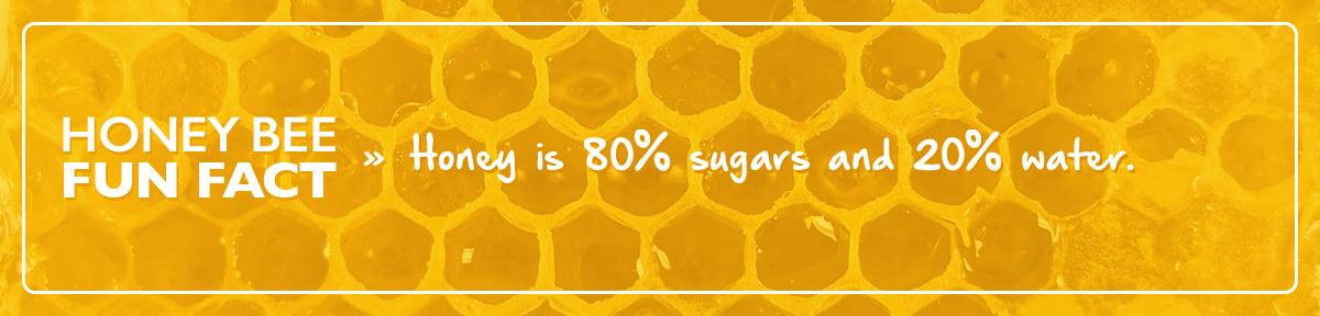 honey been fun facts