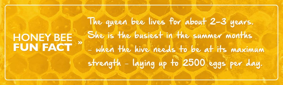 honey bee fun fact