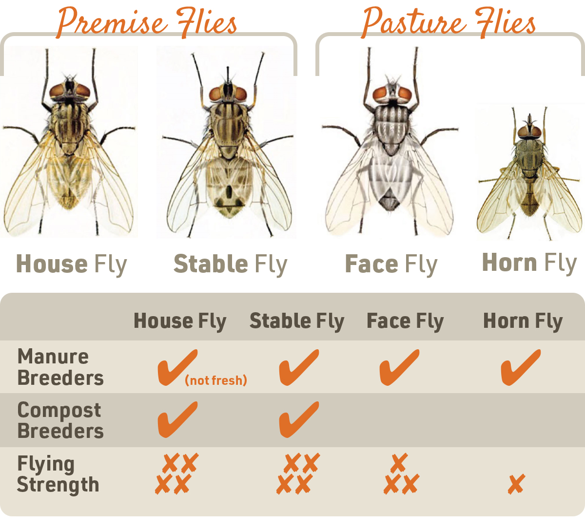 livestock fly infographic