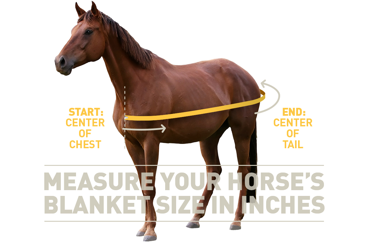 how to measure your horse for a horse blanket
