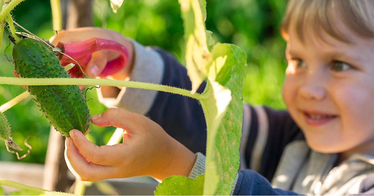 kids love to help harvest veggies