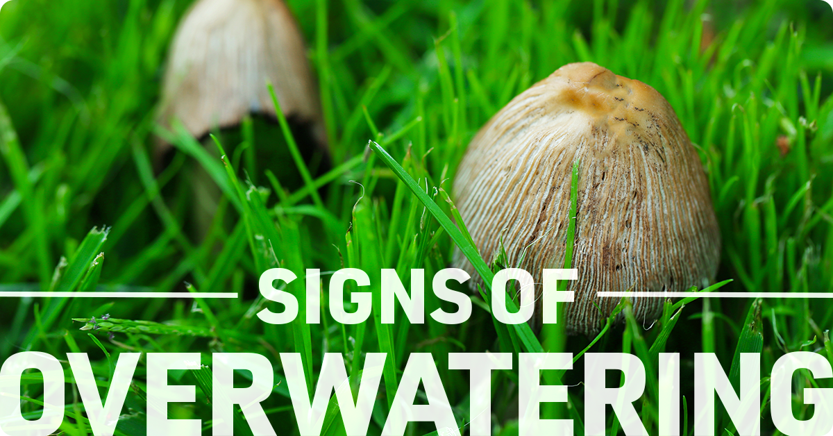 signs of overwatering