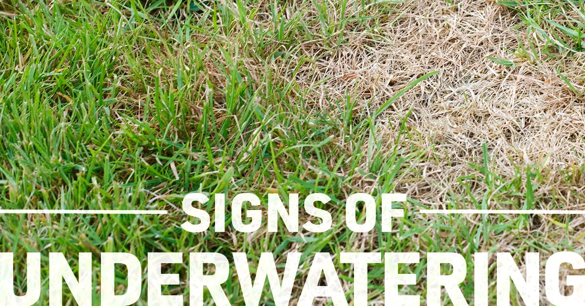 signs of underwatering