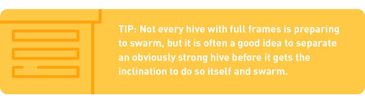 tip: not every hive with full frames is going to swarm