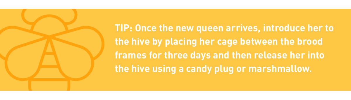 tip: introducing a new queen bee