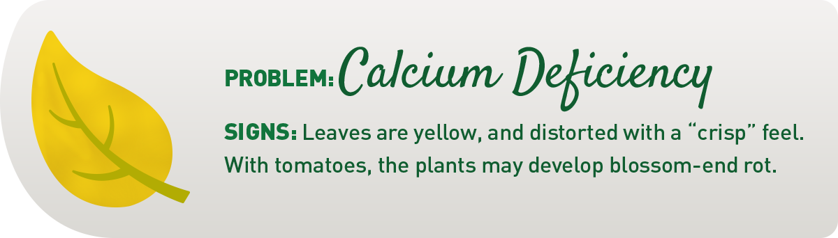 signs of calcium deficiency in plants illustration