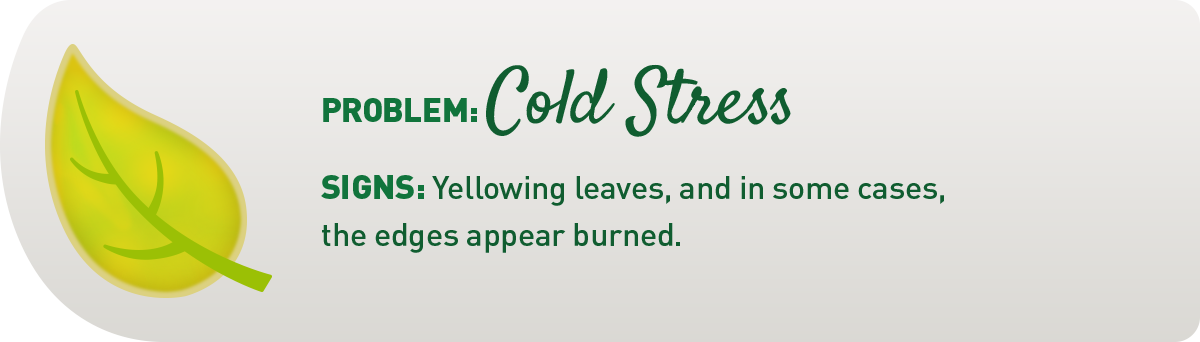signs your plant has cold stress illustration