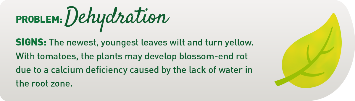 signs your plant is underwatered illustration