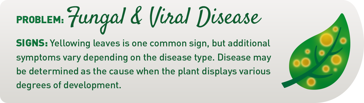 sign of fungal and viral diseases in plants illustration