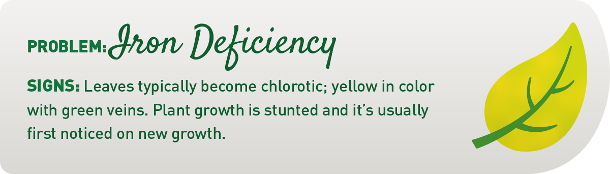signs of iron deficiency in plants illustration