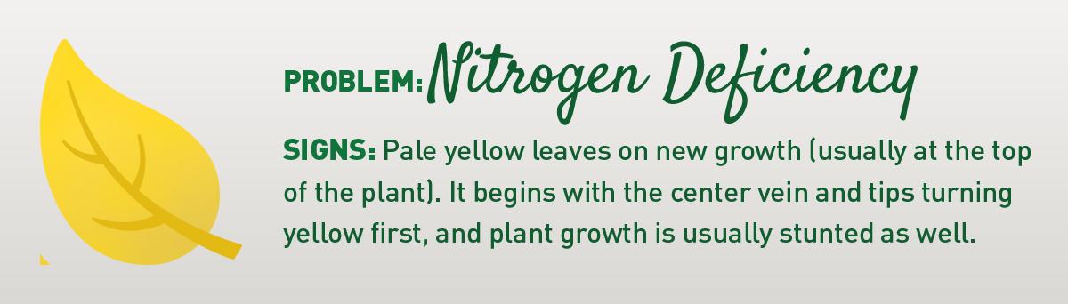 signs of nitrogen deficiency in plants illustration