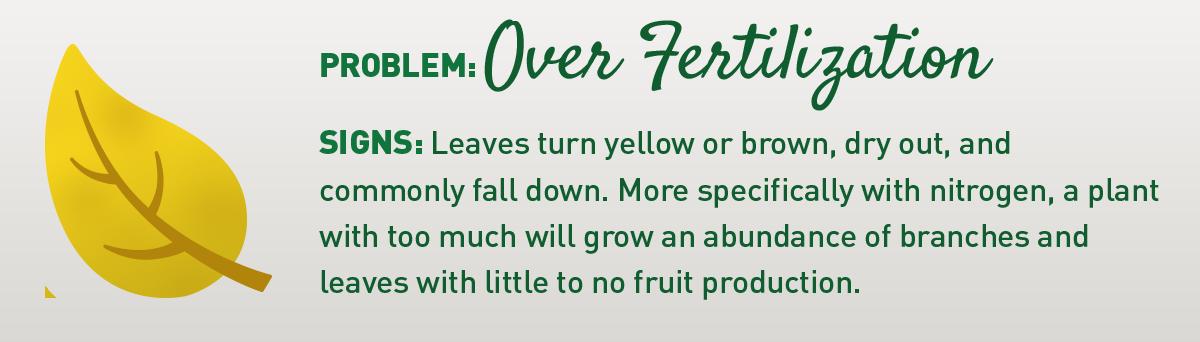 sign of over fertilizing illustration