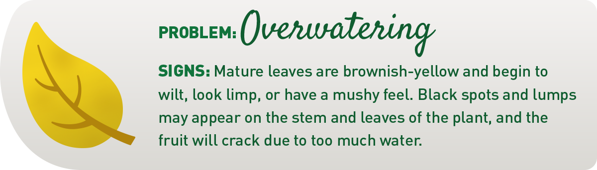 signs your plant is overwatered illustration