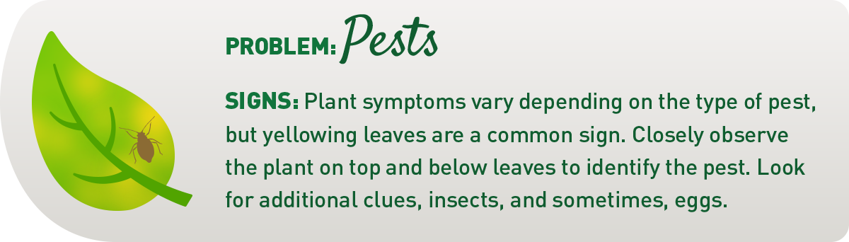 sign of common plant pests illustration