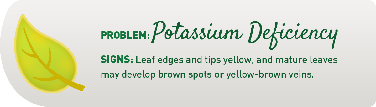 signs of potassium deficiency in plants illustration