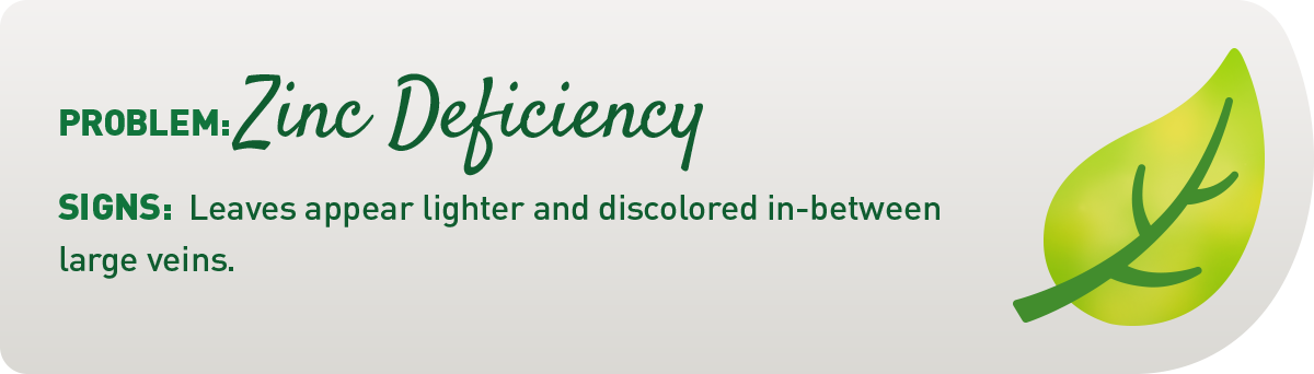 signs of zinc deficiency in plants illustration