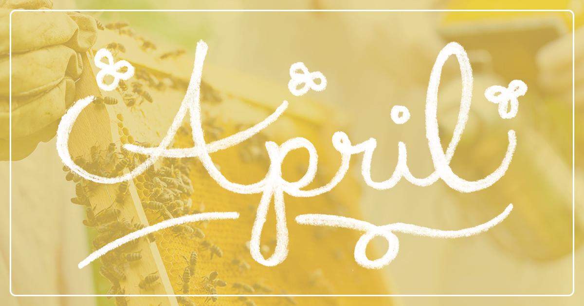 Beekeeping in April