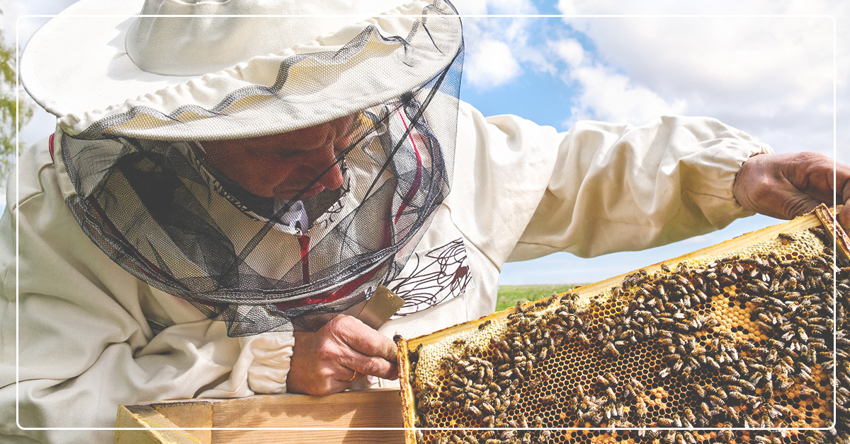 Troubleshooting Common Bee Issues