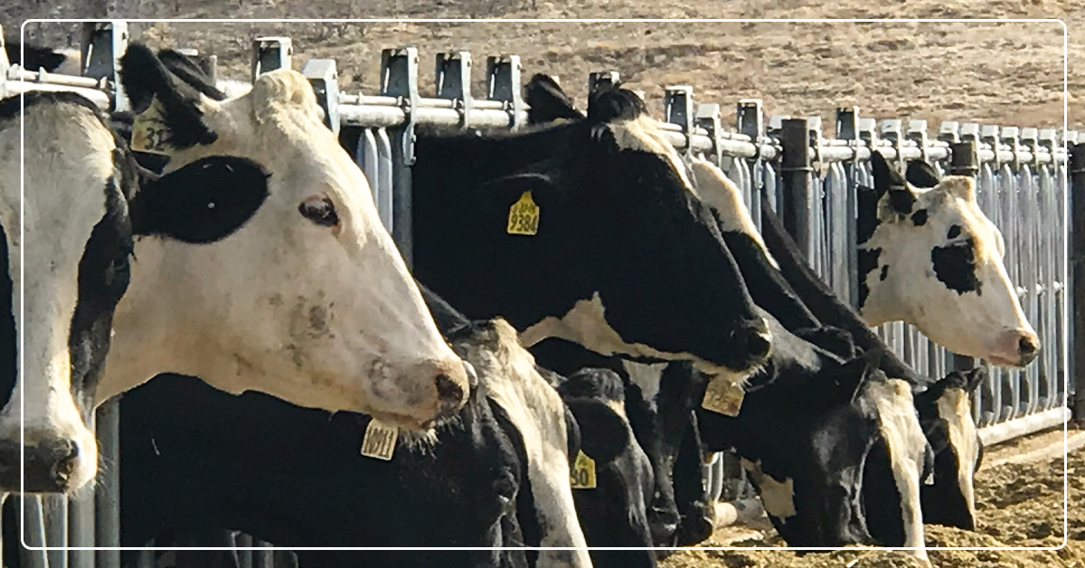 COVID-19: Lessons from Animal Agriculture