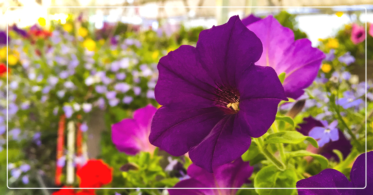 How to Arrange Beautiful Potted Flowers & Flower Baskets