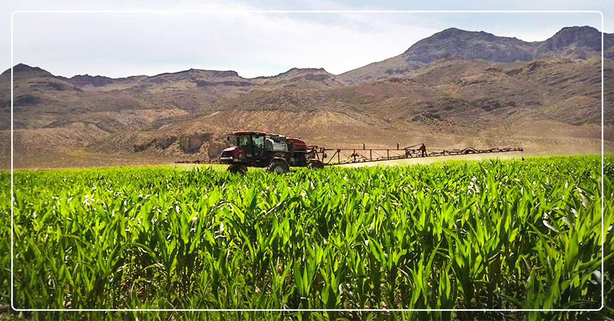 3 New Agricultural Pests Invading Intermountain West Farms