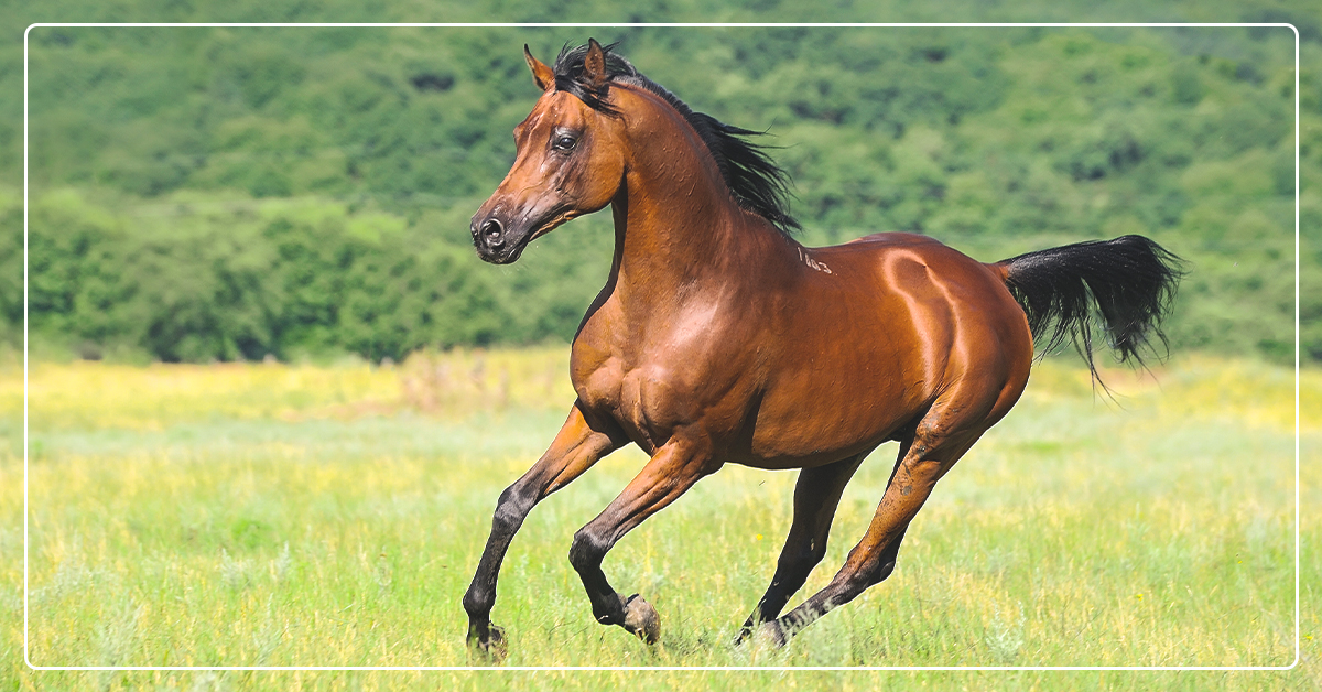 Equine Vaccines for Potentially Fatal Diseases