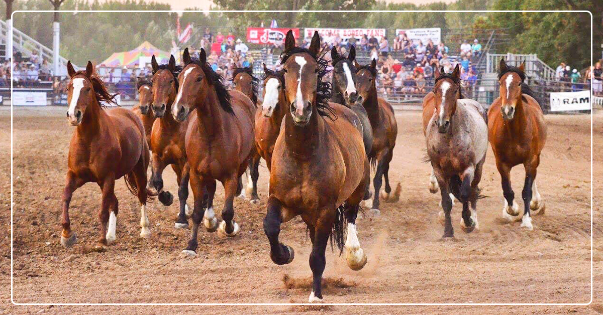Stock Contactor Breeds for Bucking Genetics, but Feeds for Performance