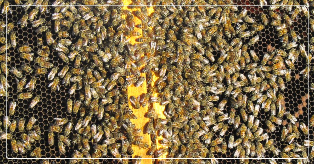 Bee-lieve in Yourself, Beekeeper Goes From Hobby To Serious Business