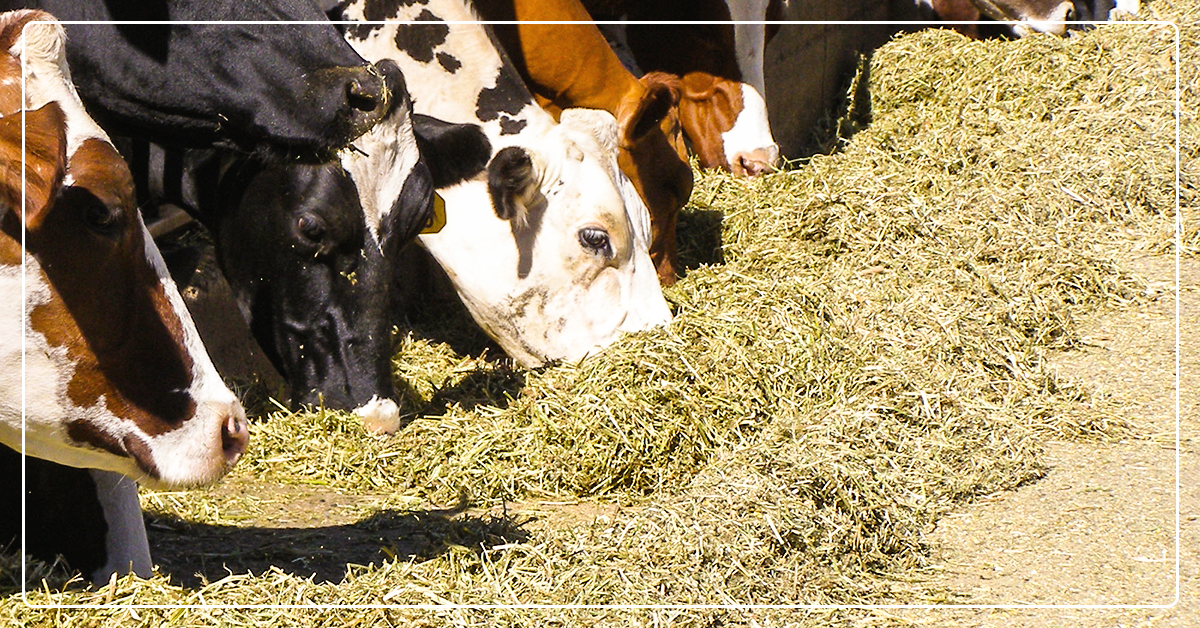 Deciphering Fiber Analyses in Your Feed & Forage Reports