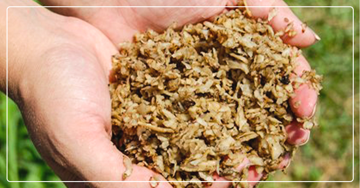 10 Great Alternatives to Hay That Maintain Performance and Save Money