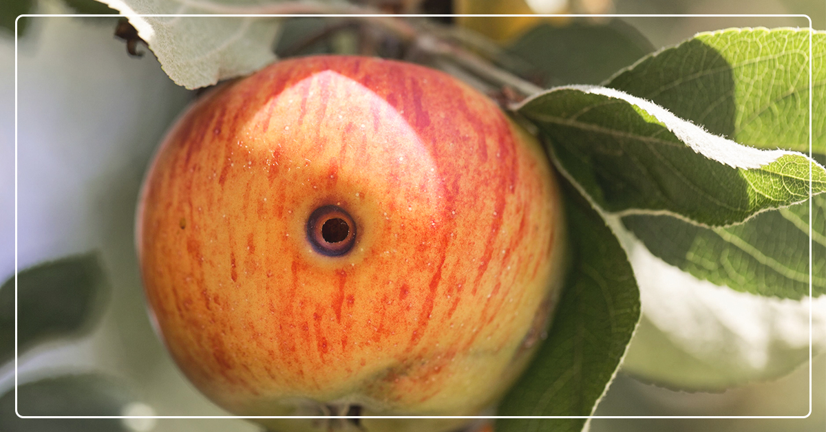 How to Control Common Fruit-Tree Pests
