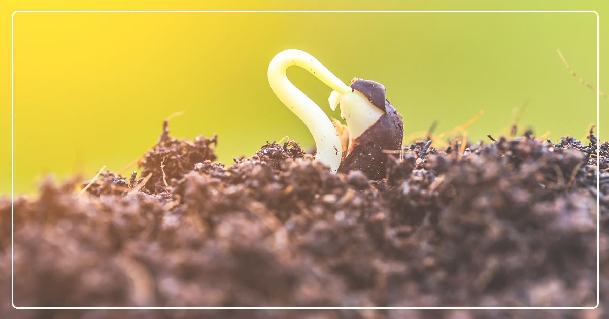 Tips for Successfully Gardening In Utah