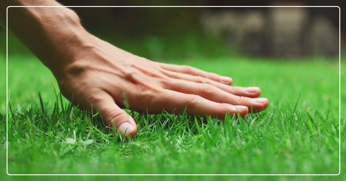 Get the Right Grass Support
