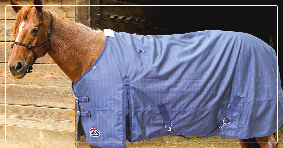 An Easy Guide to Winter Horse Blankets
