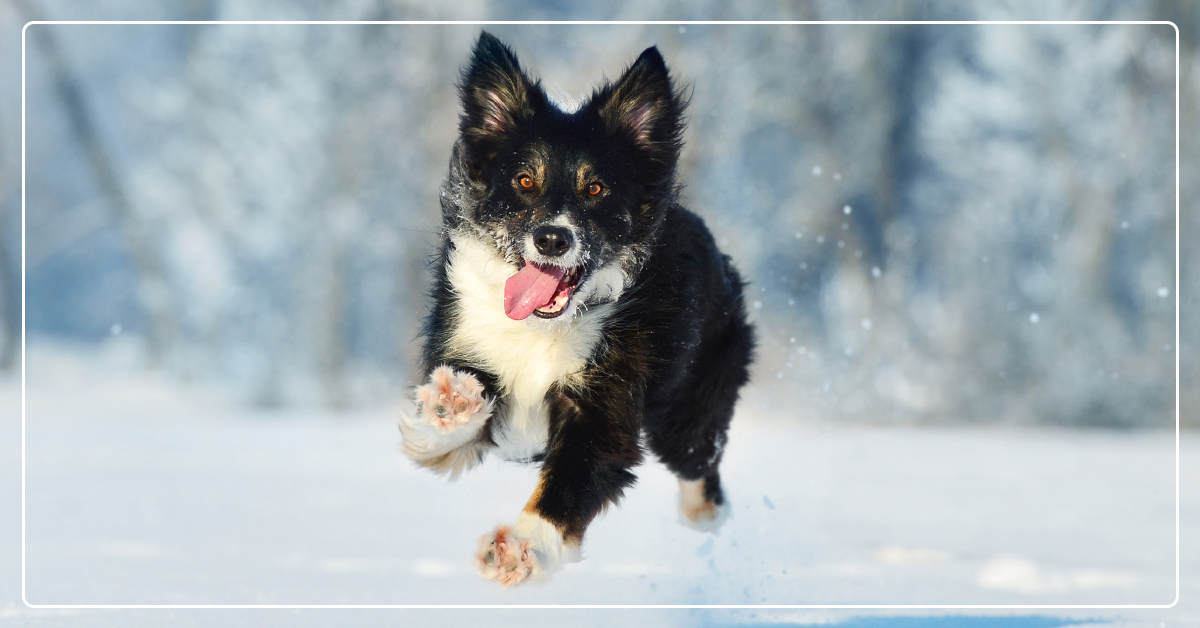 How to Care for Your Outdoor Pets During Winter