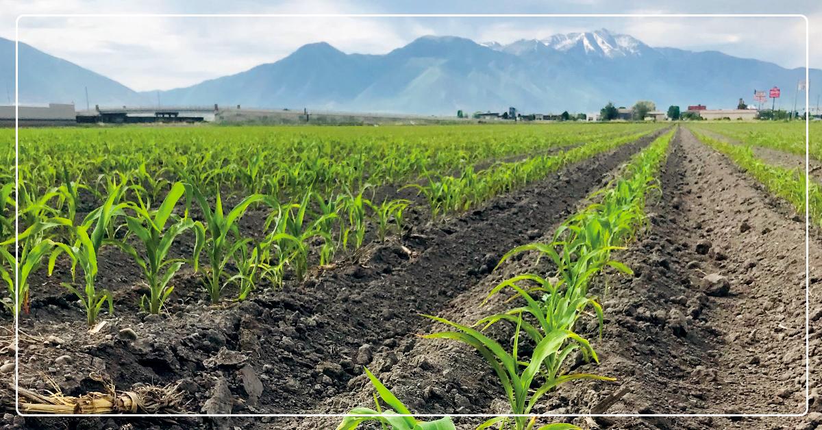 Maximize Crop Production With Micro 500 Micronutrient Fertilizer