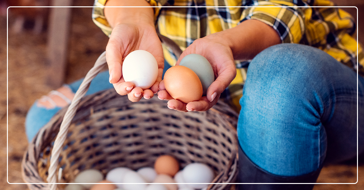 Nutritious Eggs Start With Nutritious Feed