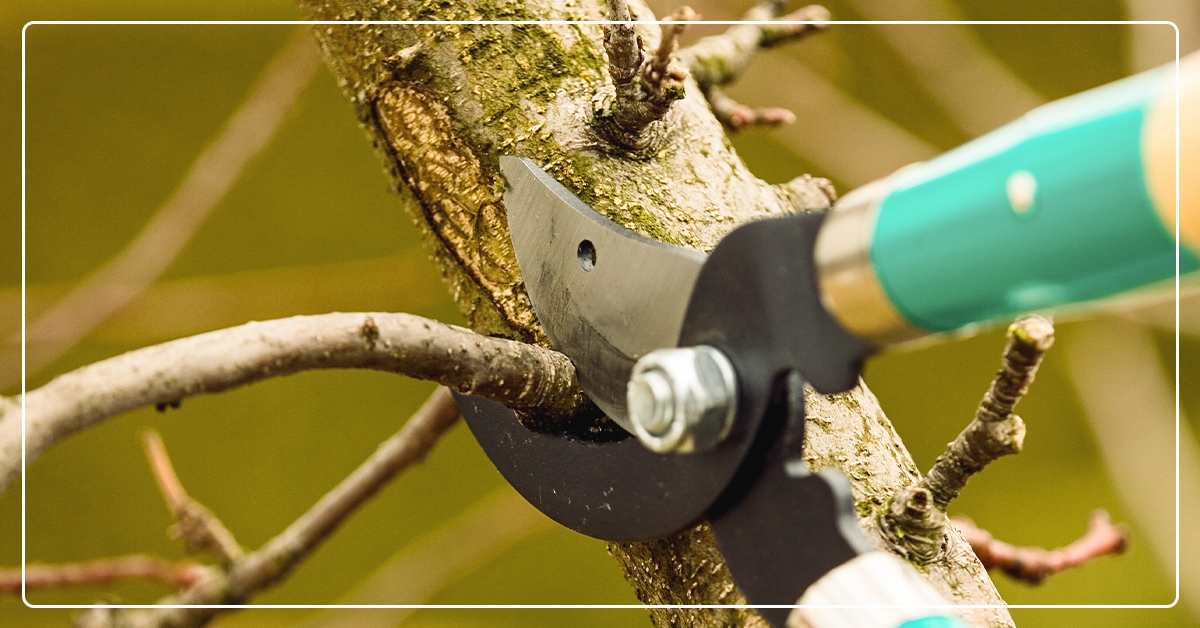 Six Helpful Tips on How to Prune a Tree