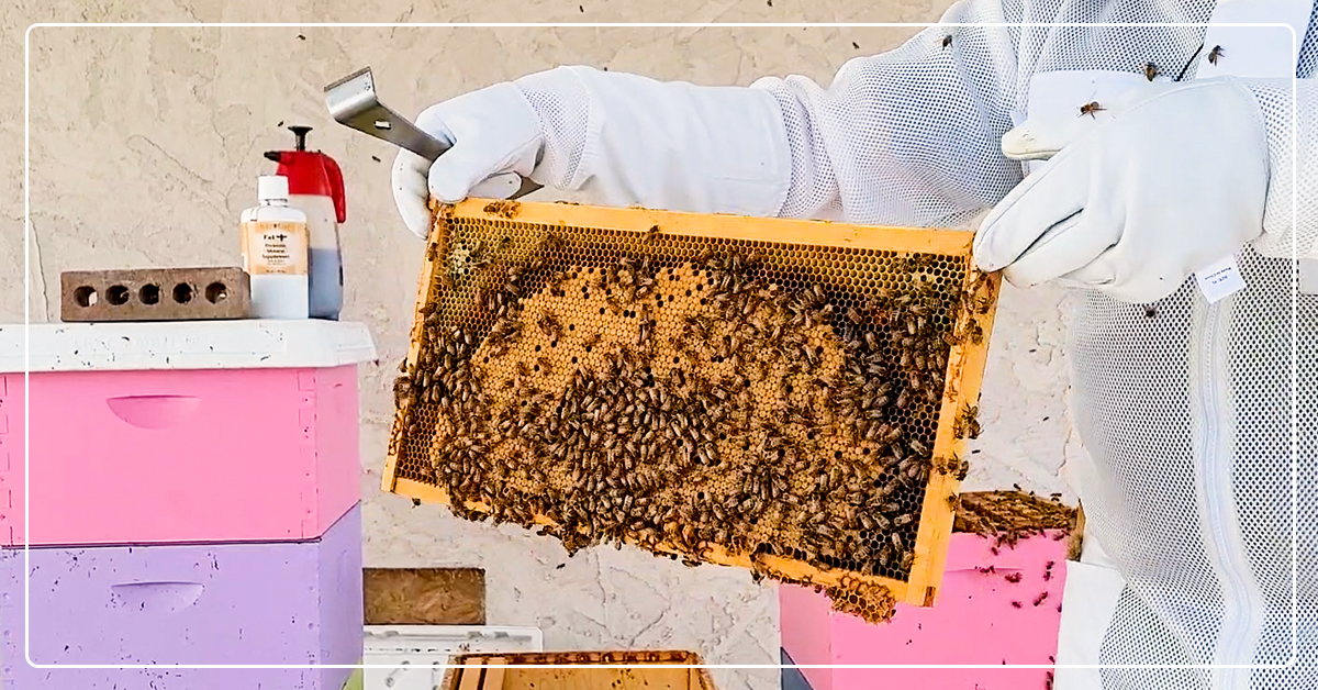 Time to Split! How to Split a Beehive