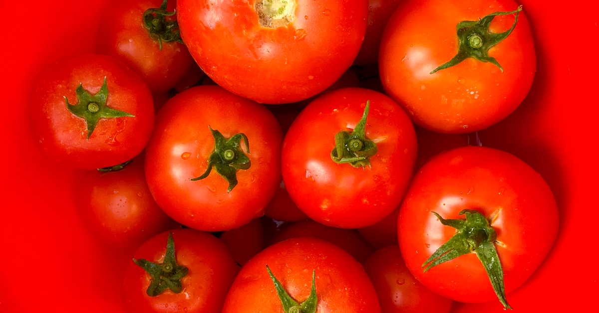 Tomato Plant Care: How to Have More Productive Tomato Plants
