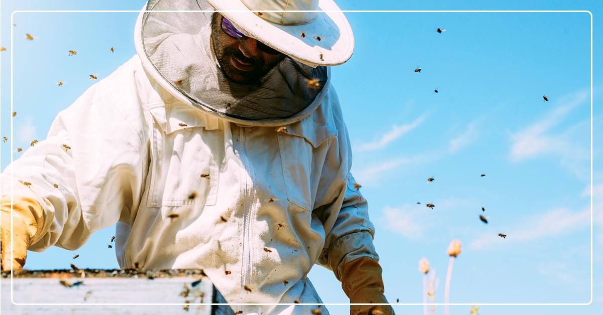 Virtual Beekeeping Classes