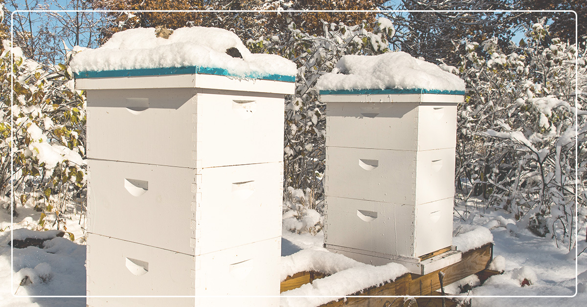 How to Guide to Winterizing Your Bees & Hives