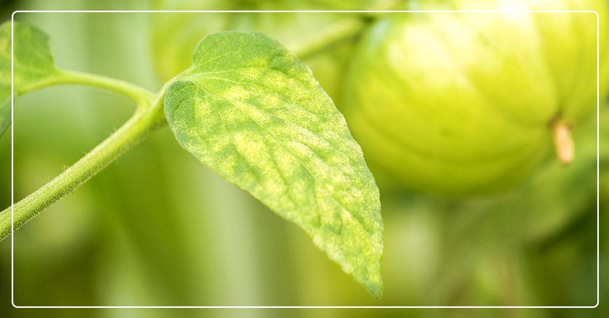 8 Reasons Plant Leaves Turn Yellow